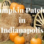 Pumpkin Patches to Visit in Indianapolis