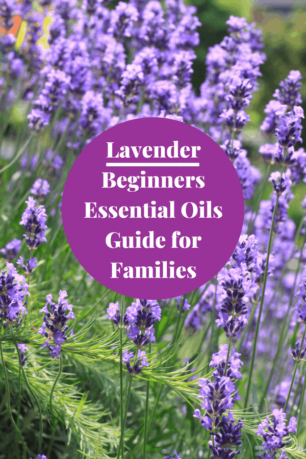 Essential Oils for Beginners - Uses for Lavender Oil